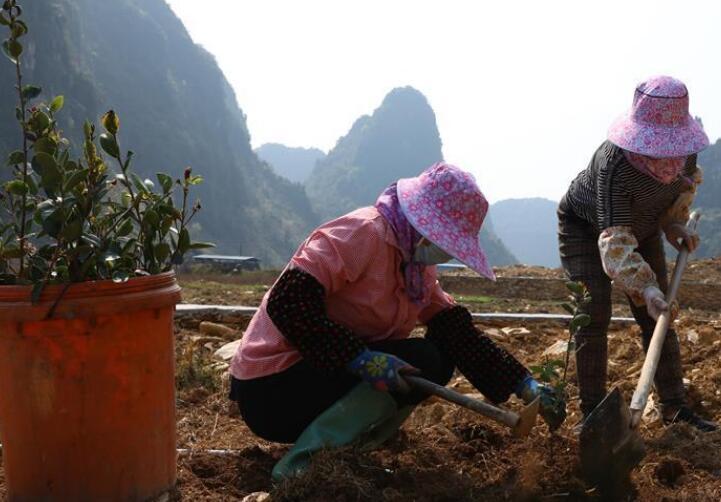 植树节里种油茶