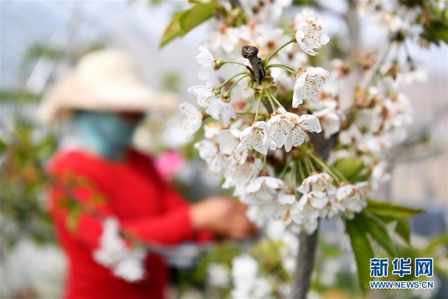 甘肃天水:致富产业助农民家门口就业增收
