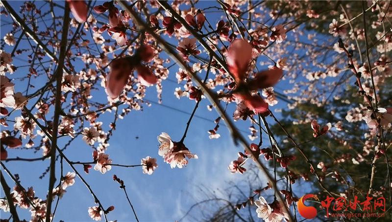 【微视频】兰州:九州台上春光美