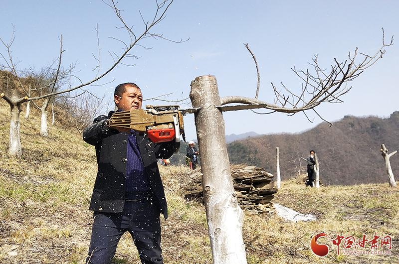 甘肃文县:春季核桃树高接换优全面展开(图)