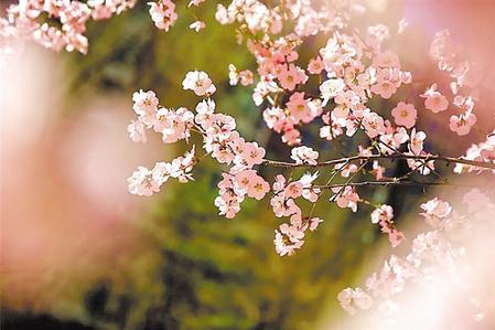 【美丽乡村】碧口早春