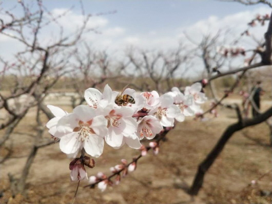 铜城复苏:春光明媚,邀你共赏芳华