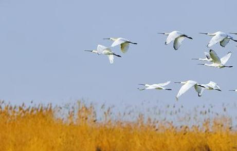 暖春三月相约宁夏沙湖 踏春观鸟吸氧清肺