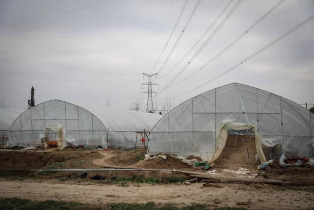 因疫情导致市场需求不足,陆成权的花卉种植基地今年损失近30万元。