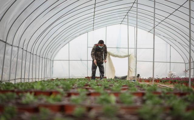 陆成权进入温室大棚内喷洒农药。