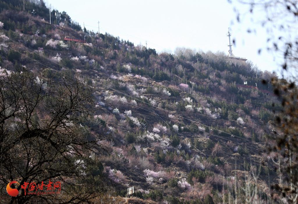 赏花季| 兰州五泉山:新绿拂面醉春风 玉兰花开又一年