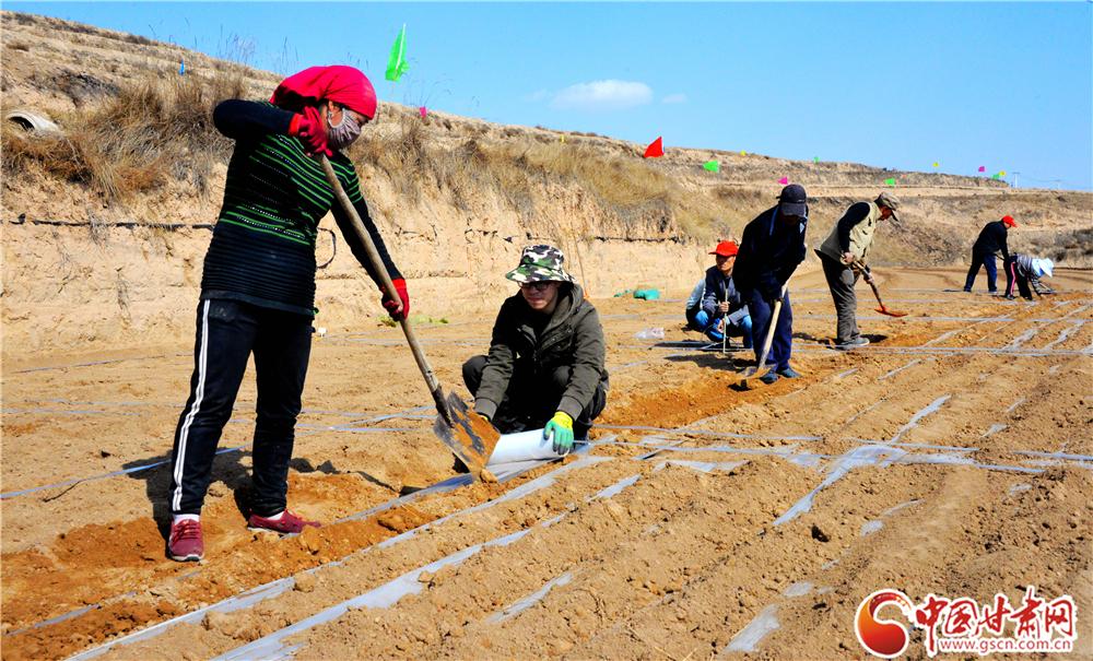 陇西县多措并举推进2万亩中药材绿色标准化药源基地建设(图)