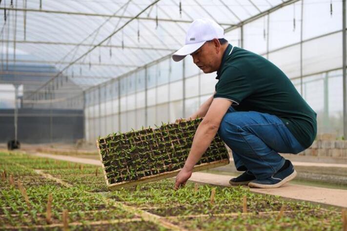 云南昆明:高原特色蔬菜育种忙
