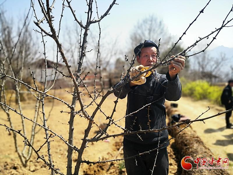 甘肃文县:科学管护春季经济林 有效增加农民收入(图)