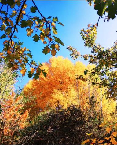 兰州市将打造有兰州特色的两山风光带和城市森林公园