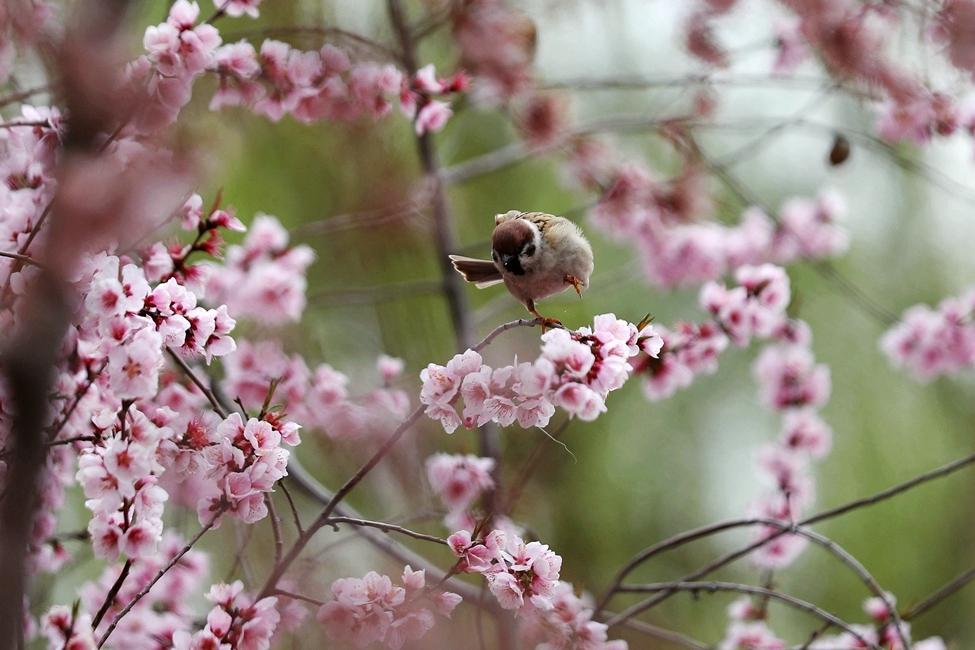 赏花季|兰州银滩湿地公园:黄河之滨花盛开 湖畔水暖春意闹