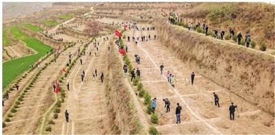 驻峰机关单位干部职工赴毛寺村开展义务植树活动