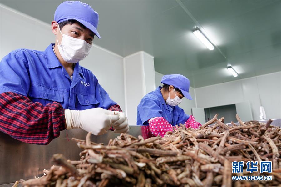 (图文互动)(3)花儿为什么这样红——重庆垫江牡丹产业发展观察