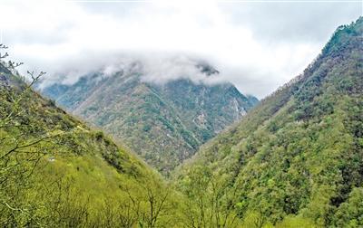 甘肃旅游丨白水江熊猫森林蜜 国家级自然保护区的馈赠