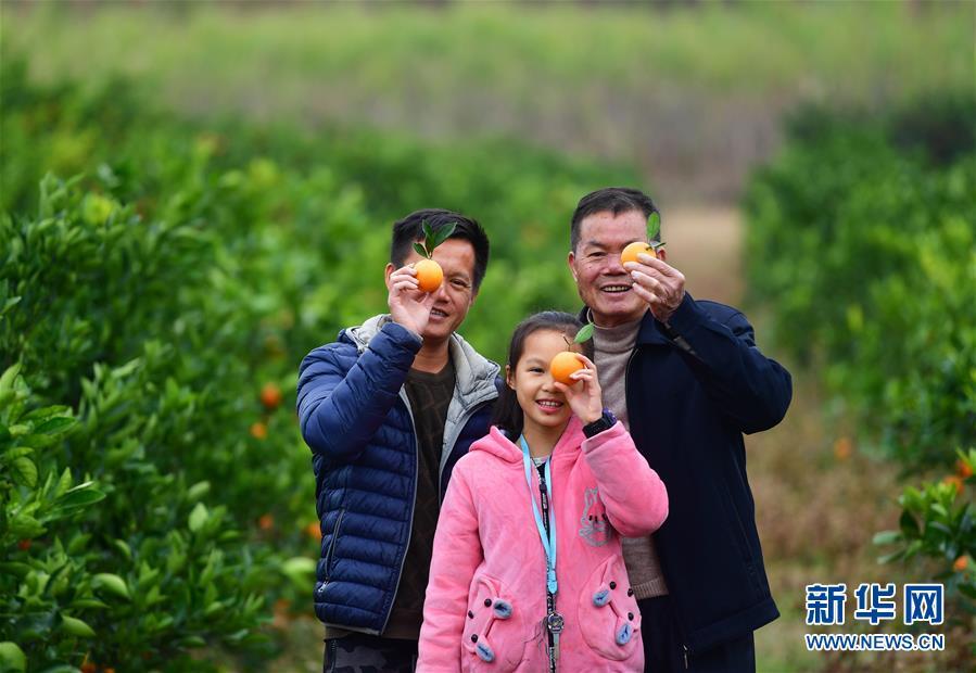 可爱的乡村——鹿寨蜜橙父子兵