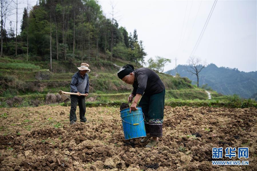 (社会)(2)湖南:十八洞村里春耕忙