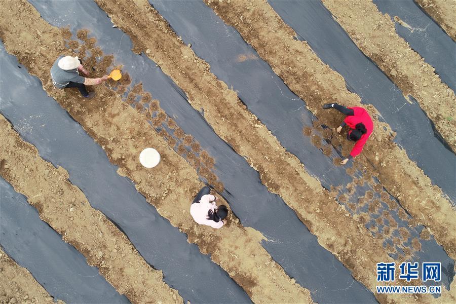 #(社会)(1)贵州黔西:产销一体发展产业