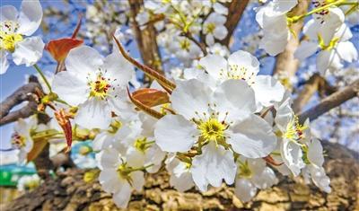 春暖花开旅游季丨静养一年 花开半月