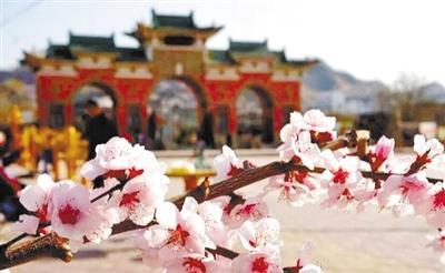春暖花开旅游季丨春红正当时 赏花好时节