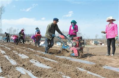 临夏州积石山县寨子沟乡青丰中药材农民专业合作带动周边群众增收致富