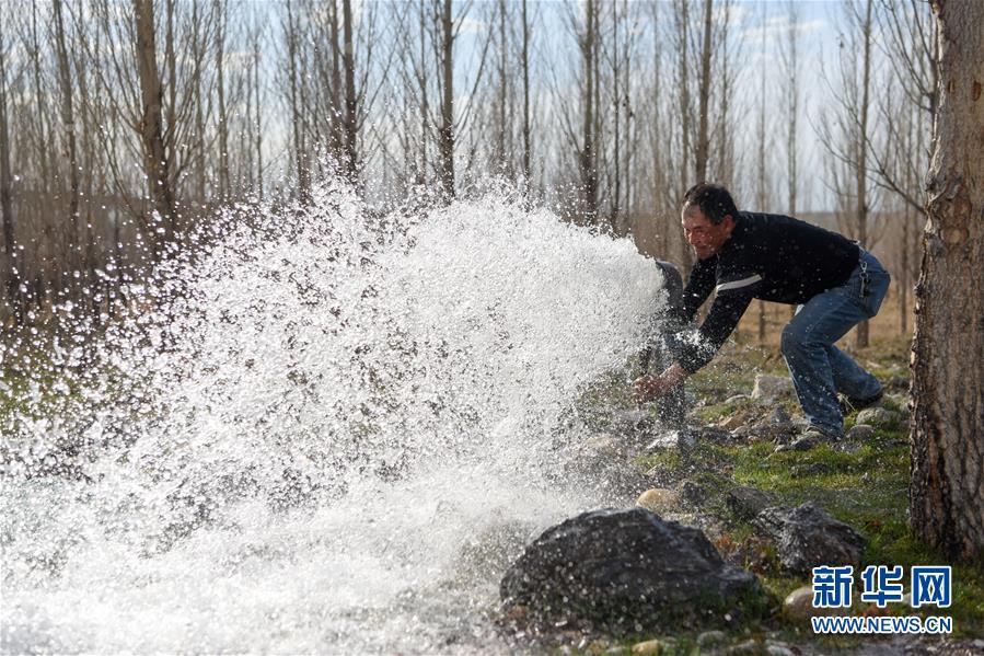 (环境)(2)新疆阿勒泰:戈壁滩上育树苗 中水回用助力绿化工程