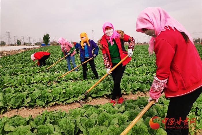 金昌永昌县产业链上打工种菜啥体验 有房有车奔小康