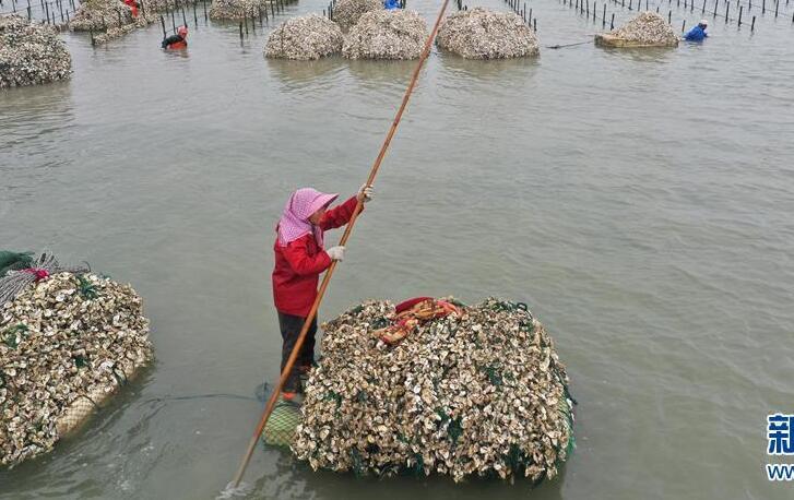 福建南安:生产稳步推进