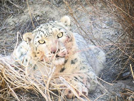 野生动物频现 甘肃生态环境持续向好