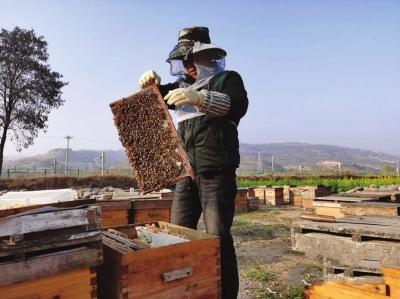 天水养蜂人酿出甜蜜生活