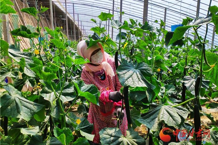 张掖甘州区:国道党旗红 串起乡村致富产业带