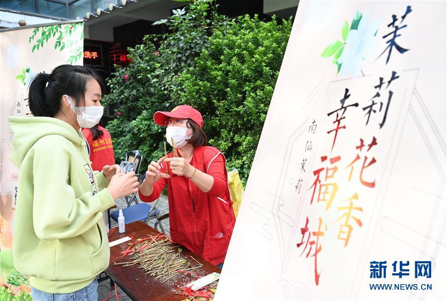 (社会)(2)福州:向市民免费送20万株茉莉花苗