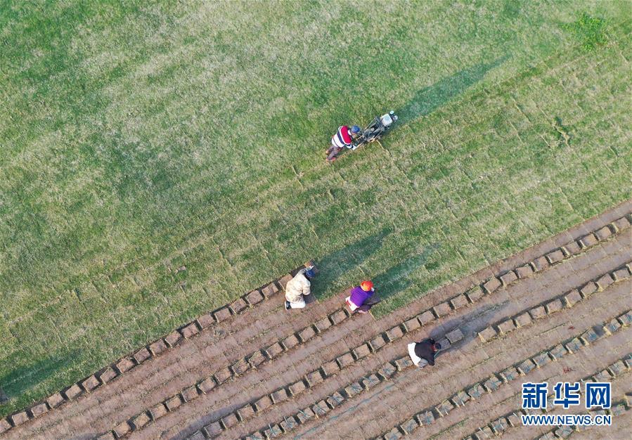 #(经济)(1)江苏泗洪:发展草坪种植 帮助农民家门口就业