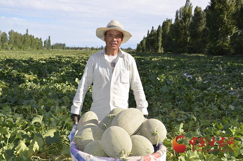"""瓜州:蜜瓜产业让群众走向""""甜蜜生活"""""""