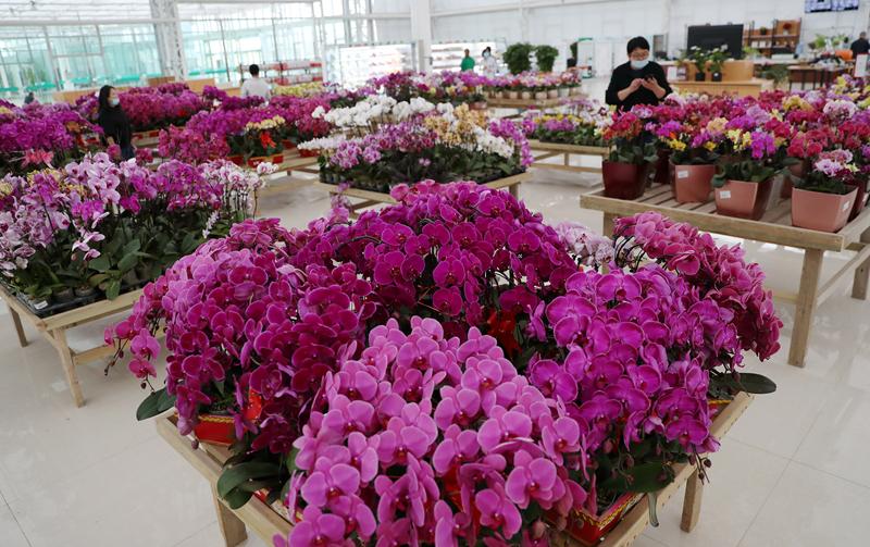 兰州新区现代农业示范园:花果飘香春色浓