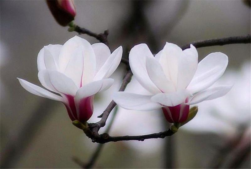 在鲜花盛开的五月,让我们为最可爱的人唱响我们心中的歌《白玉兰——致敬白衣天使》