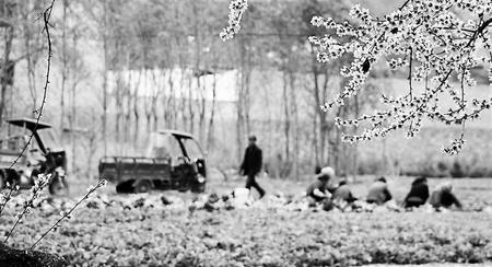 【决战决胜脱贫攻坚】陇南宕昌县发展蔬菜产业 拓宽群众增收致富门路