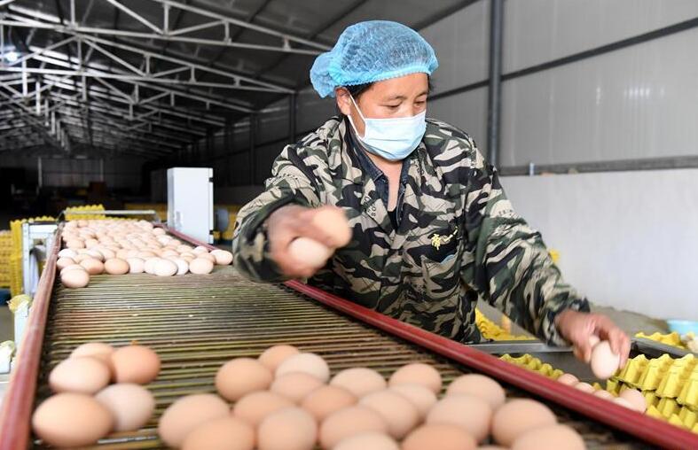 河南汝阳:发展特色种植养殖产业助力农民脱贫