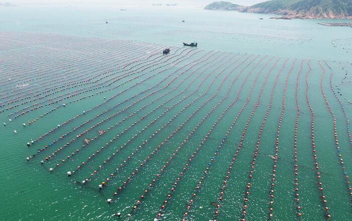 福建连江出台措施促进鲍鱼产业转型升级