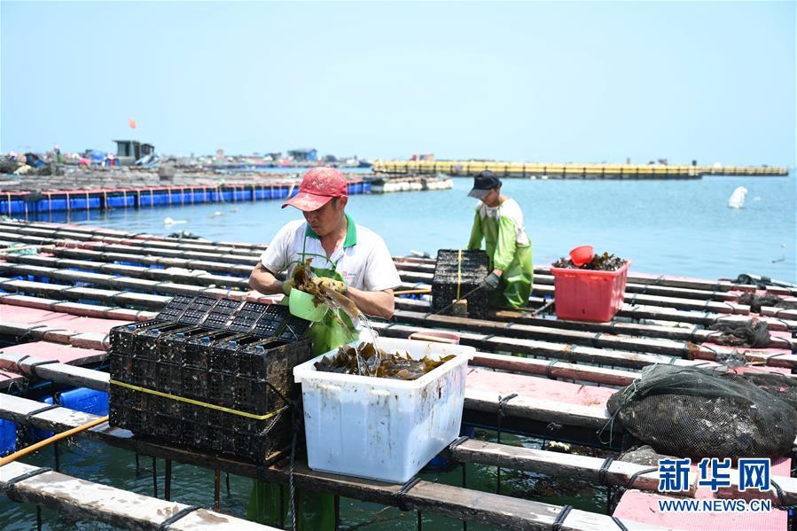 (经济)(3)福建连江出台措施促进鲍鱼产业转型升级
