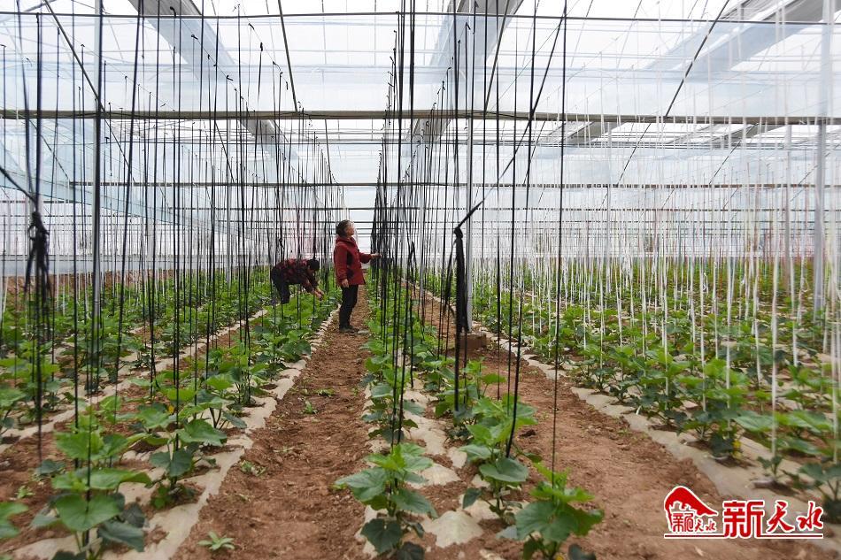 为现代化农业探路——秦州区现代农业科技示范园区见闻