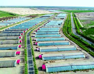 """戈壁滩上的""""绿宝石""""——酒泉市大力发展戈壁农业助推脱贫攻坚纪实"""