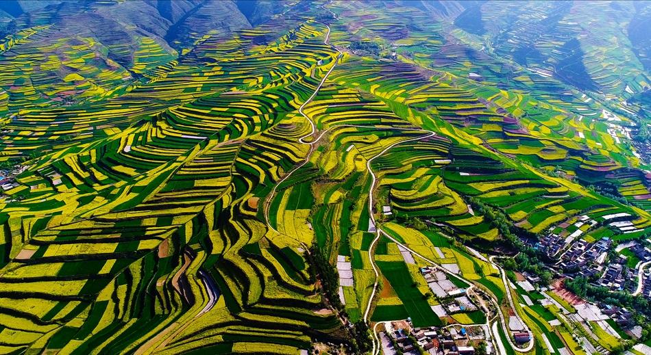 武山县以花为媒推动农旅融合发展