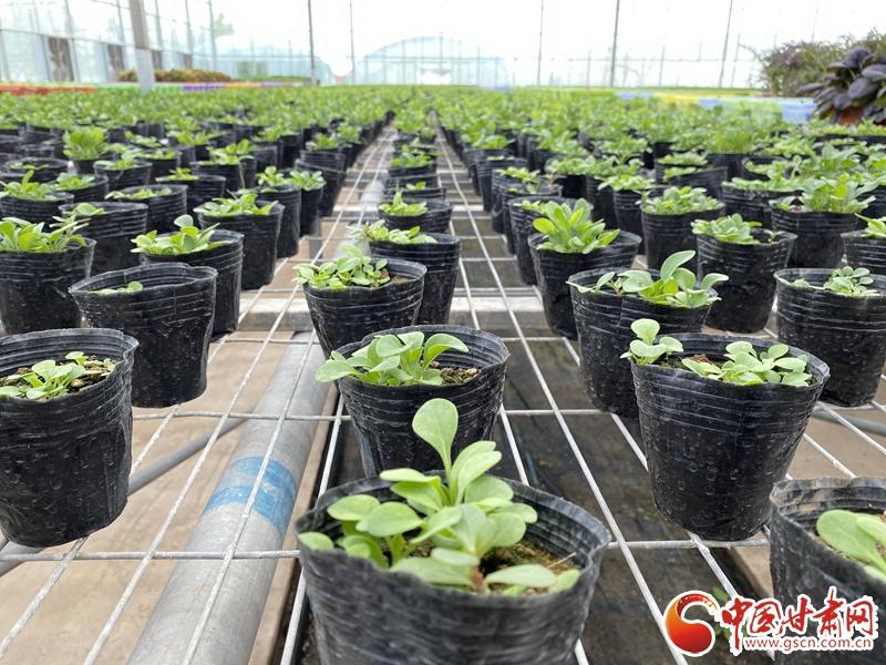 【甘肃省决战决胜脱贫攻坚】皋兰:电商拓销路 设施农业有了新订单