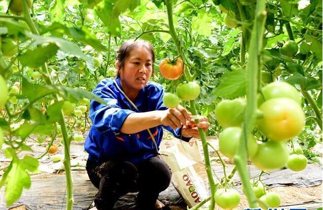 河南汝南:带贫模式为民增收