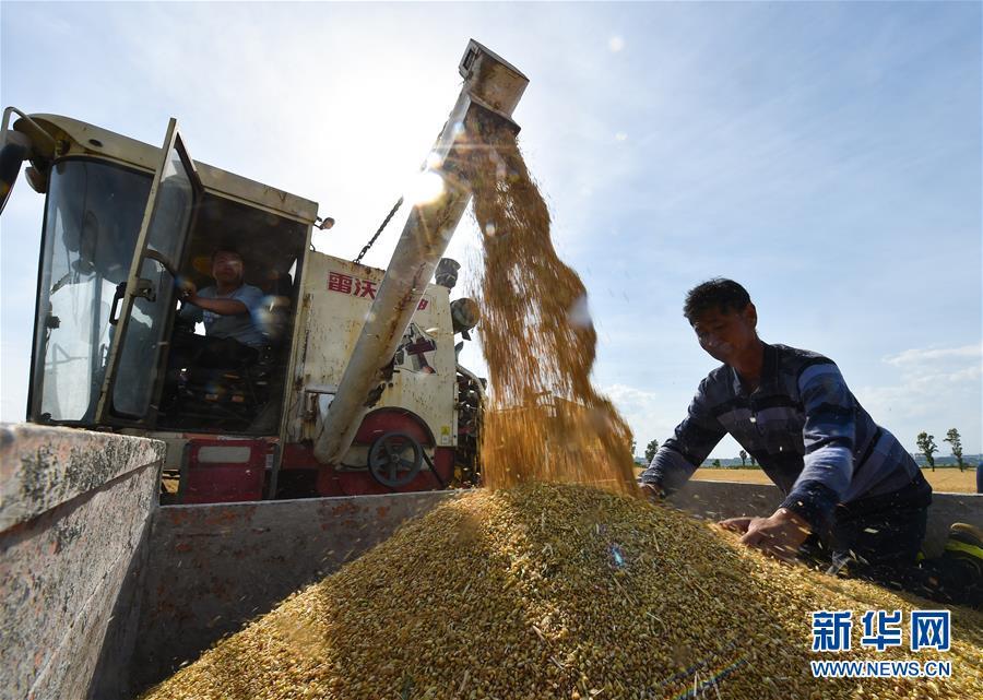 (经济)(3)晋南小麦夏收忙