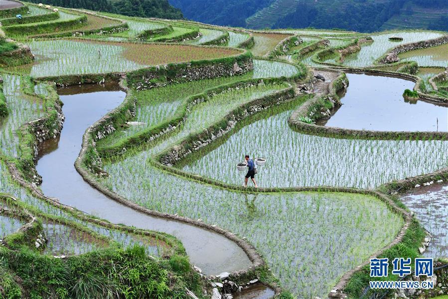 (脱贫攻坚)(1)贵州从江:播下种螺助增收