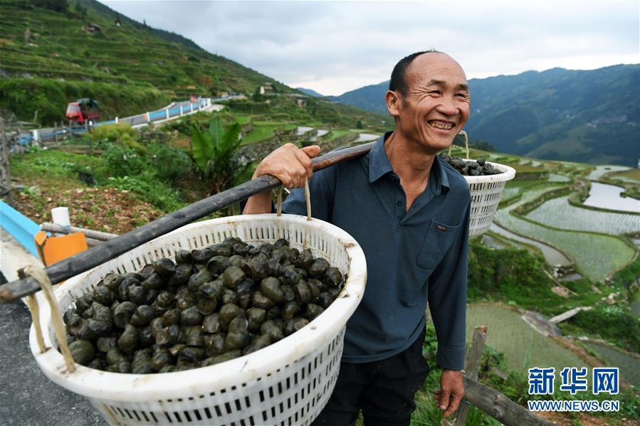 (脱贫攻坚)(2)贵州从江:播下种螺助增收