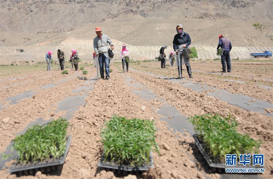 (经济)(1)巴彦淖尔:高效农业促增收