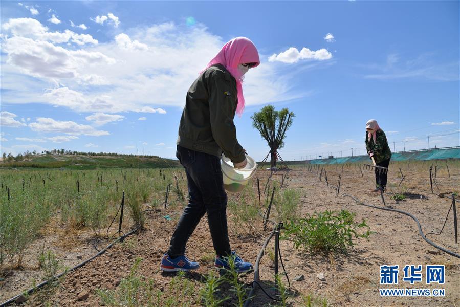 (环境)(1)内蒙古阿拉善右旗:生态修复忙