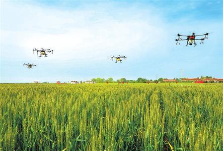 平凉崆峒区利用植保无人机喷洒农药防治小麦病(图)